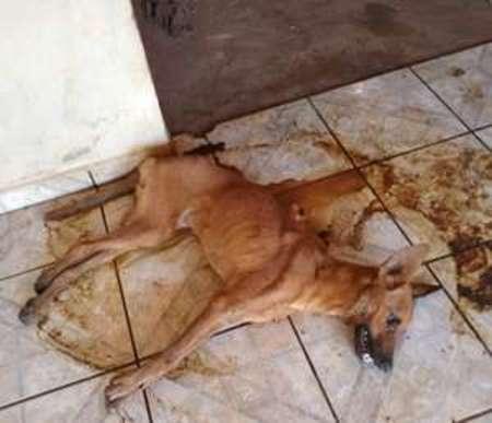 Left or right cachorro maus tratos cassilandia 28 de julho de 2019