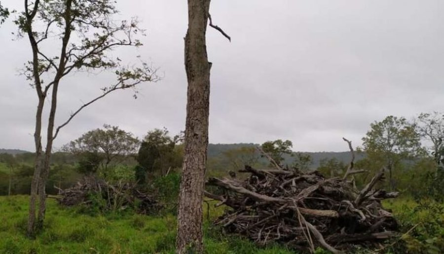 Center desmatamento bela vista 750x430