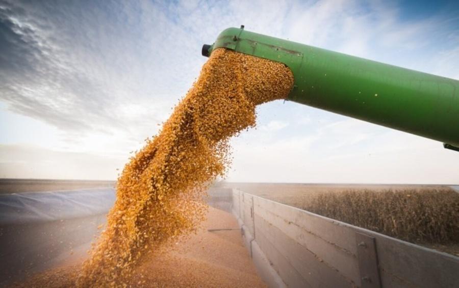 Center umidade do milho para colheita